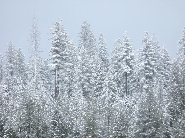 Danielle Collins, Snow Trees, Photography, Coach, Wellness, Wellbeing, Sacred Pause